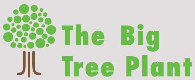 Big_tree_logo_q